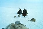 Unidentified Innu travelling on a komatik pulled by a dog team, 1966-1968 (photo Georg Henriksen).