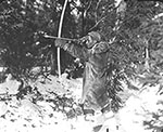 Unidentified Innu man from the Voisey's Bay/Davis Inlet area of northern Labrador hunting partridge with a bow and arrow (photo Peary-MacMillan Arctic Museum)