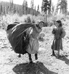 Etit (Rich) Tshakapesh and Mani-An (Rich) Rich gathering spruce boughs for the tent floor in the Natuashish area in the early 1960s (photo Ray Webber).